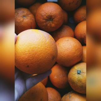 Oranges mûres et sucrées d'Espagne